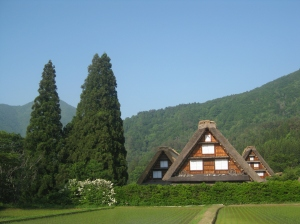 Gassho-zuri thatched houses at Shirakawago UNESCO World Heritage Site