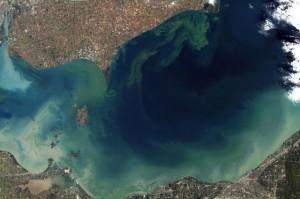 Lake Erie Bloom 2011
