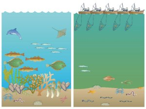 Visions of the coastal/southern North Sea: A Now vision characterized by low transparency, high trawling effort, and depauperate benthic communities; B Then vision characterized by no trawling, high transparency, and diverse benthic communities