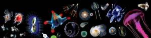 Image: Plankton Chronicles
